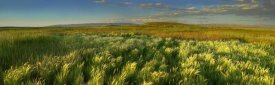 Tim Fitzharris - Grasslands, Arapaho National Wildlife Refuge, Colorado