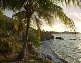 Tim Fitzharris - Wilkes Point at sunset with palm trees, Roatan Island, Honduras