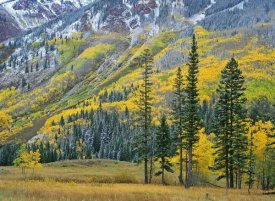Tim Fitzharris - Aspen grove in fall colors, Maroon Bells, Snowmass Wilderness, Colorado