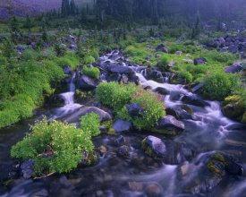 Tim Fitzharris - Paradise River with wildflowers, Mount Rainier National Park, Washington