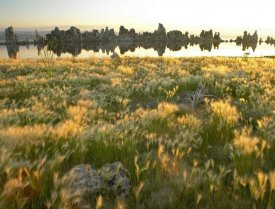 Tim Fitzharris - Squirreltail Barley and Tufa Towers silhouetted at dawn, Mono Lake, California