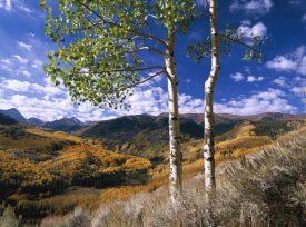 Tim Fitzharris - Aspen trees in fall-colors on Elk Mountains, Capitol Creek trailhead, Colorado