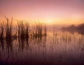 Tim Fitzharris - Reeds reflected in Sweet Bay Pond at sunrise, Everglades National Park, Florida