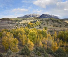 Tim Fitzharris - Quaking Aspen forest and Chair Mountain in autumn, Raggeds Wilderness, Colorado