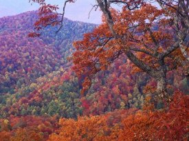 Tim Fitzharris - Blue Ridge Range with autumn deciduous forest, near Buck Creek Gap, North Carolina