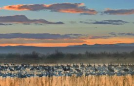 Tim Fitzharris - Snow Geese and Sandhill Cranes, Bosque del Apache National Wildlife Refuge, New Mexico