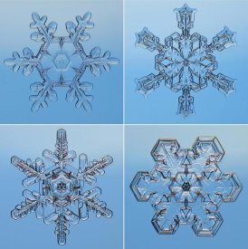 Steve Gettle - Snowflakes seen through microscope