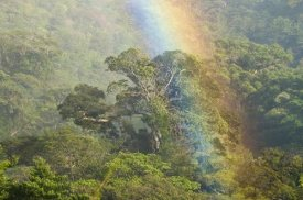 Steve Gettle - Rainbow over rainforest canopy, Costa Rica