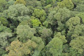 Ch'ien Lee - Canopy of lowland mixed dipterocarp forest, Lambir Hills National Park, Borneo, Malaysia