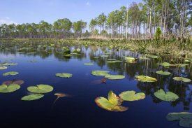 Scott Leslie - Lake with lily pads, southern Florida