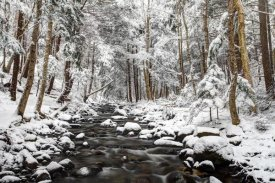 Scott Leslie - Stream in winter, Nova Scotia, Canada