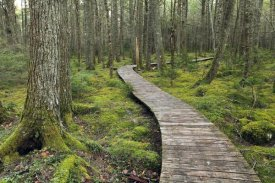 Scott Leslie - Canadian Hemlock grove with boardwalk, Kejimkujik National Park, Nova Scotia, Canada