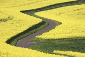 Cyril Ruoso - Field Mustard fields and road, France