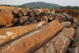 Cyril Ruoso - Logged timber from the tropical rainforest, Cameroon
