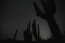 Cyril Ruoso - Cardon cacti by night with stars, El Vizcaino Biosphere Reserve, Mexico. Sequence 2 of 2