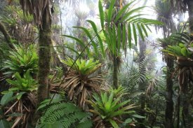 Cyril Ruoso - Bromeliad and tree fern at 1600 meters altitude in tropical rainforest, Sierra Nevada de Santa Marta National Park, Colombia