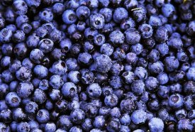 Jan Vermeer - Bilberry close up of harvested berries, North America