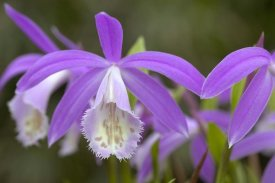 VisionsPictures - Orchid flowers