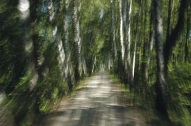 Konrad Wothe - Tree lined road, abstract Oberbayern, Germany