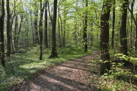 Konrad Wothe - Trail through deciduous forest in spring, Upper Bavaria, Germany