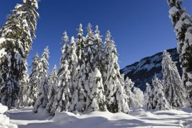 Konrad Wothe - Coniferous forest in winter, Wetterstein Mountains, Alps, Upper Bavaria, Germany