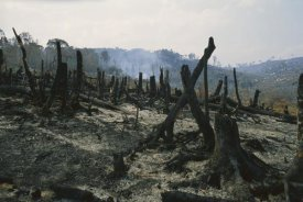 Konrad Wothe - Slash and burn agriculture, where forest is burned to create agricultural land, Madagascar