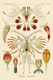 Ernst Haeckel - Haeckel Nature Illustrations: Crustaceans