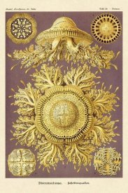 Ernst Haeckel - Haeckel Nature Illustrations: Jelly Fish