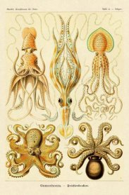 Ernst Haeckel - Haeckel Nature Illustrations: Cephlopods