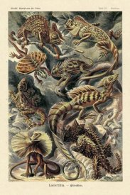 Ernst Haeckel - Haeckel Nature Illustrations: Lizards