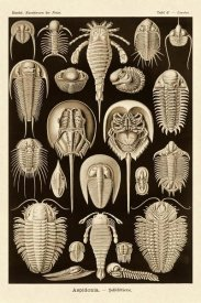 Ernst Haeckel - Haeckel Nature Illustrations: Athropods - Sepia Tint