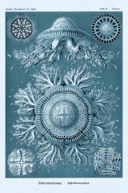 Ernst Haeckel - Haeckel Nature Illustrations: Jelly Fish - Blue-Green Tint