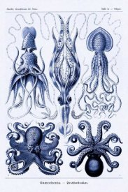 Ernst Haeckel - Haeckel Nature Illustrations: Jelly Fish - Dark Blue Tint