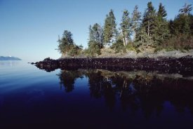 Flip Nicklin - High tide mark shows oil spilled by Exxon Valdez, Prince William Sound, Alaska