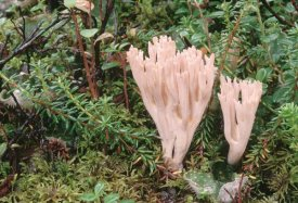 Michael Quinton - Fungus growing on forest floor, summer, Alaska