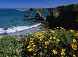 Tim Fitzharris - California Poppies on coastal cliff, Jughandle State Reserve, California