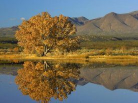 Tim Fitzharris - Cottonwood fall foliage with Magdalena Mountains, New Mexico