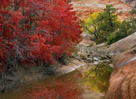 Tim Fitzharris - Maple and Cottonwood trees in autumn, Zion National Park, Utah
