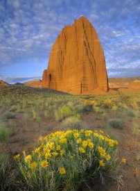 Tim Fitzharris - Common Sunflowers and Temple of the Sun, Capitol Reef NP, Utah