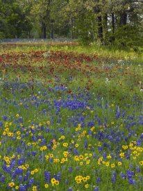 Tim Fitzharris - Sand Bluebonnet , Drummond's Phlox and Tickseed, Texas