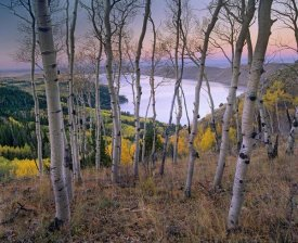 Tim Fitzharris - Aspen forest overlooking Fremont Lake, Bridger-Teton National Forest, Wyoming