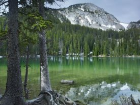 Tim Fitzharris - Pine trees on the edge of Fairy Lake, Montana