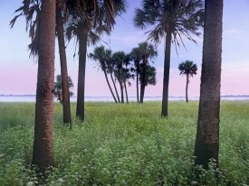 Tim Fitzharris - Cabbage Palm meadow, Myakka River State Park, Florida