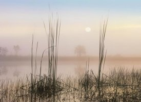 Tim Fitzharris - Reeds in Sweet Bay Pond, Everglades National Park, Florida