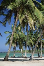 Konrad Wothe - Coconut Palm trees and beach, Dominican Republic