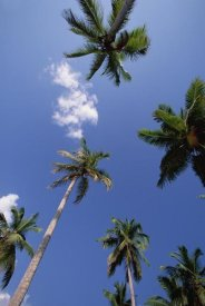 Konrad Wothe - Coconut Palm trees and blue sky, Dominican Republic