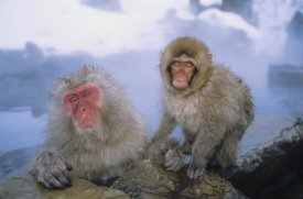 Konrad Wothe - Japanese Macaques soaking in hot springs, Japanese Alps, Nagano, Japan
