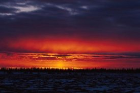 Konrad Wothe - Sunset over boreal forest, Churchill,  Canada
