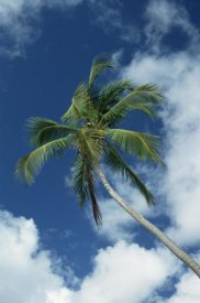 Konrad Wothe - Coconut Palm against blue sky and clouds
