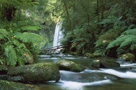 Konrad Wothe - Hopetoun Falls in the rainforest, Otway National Park, Australia